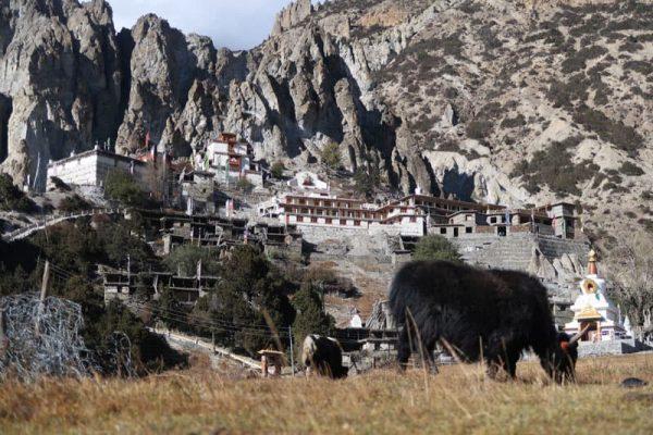 Iaci și mănăstirea Manang, Annapurna Circuit.